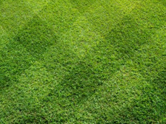 Lawn Care Experts St Charles
