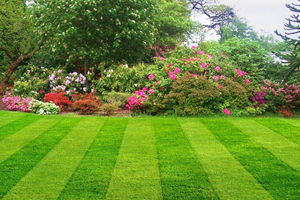 lawncarestlouis